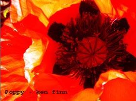 Poppies for sacrifice